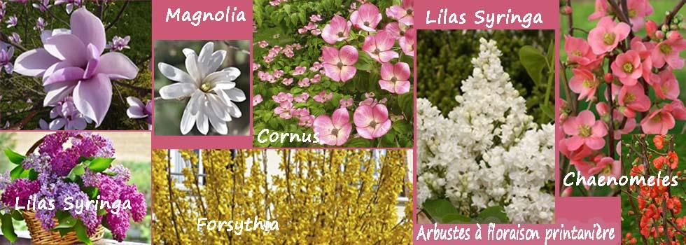Arbustes à floraison de printemps