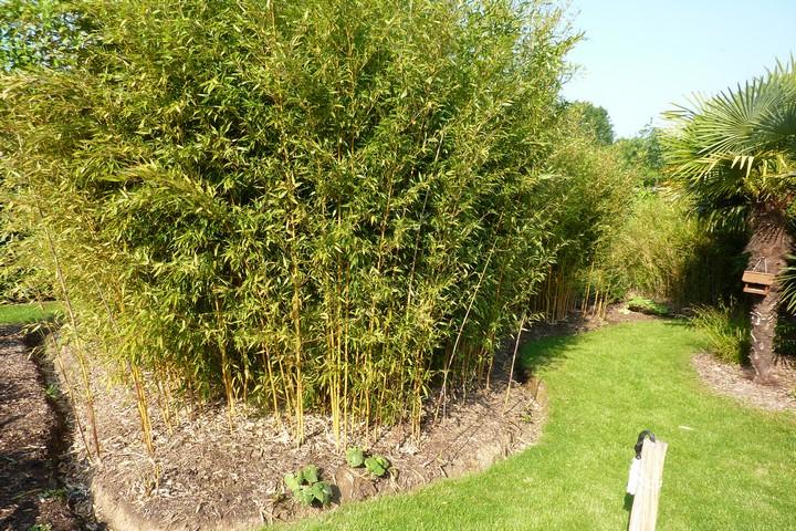 Îlot de Bambous