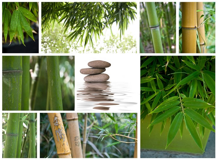 composition zen