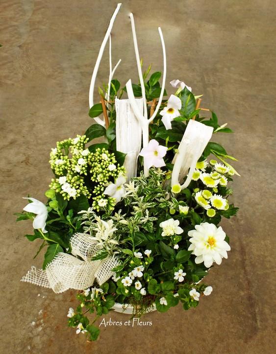 Coupes de Plantes avec fleurs coupées
