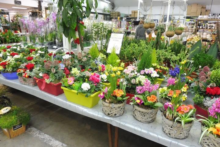 Espace Coupes de Plantes