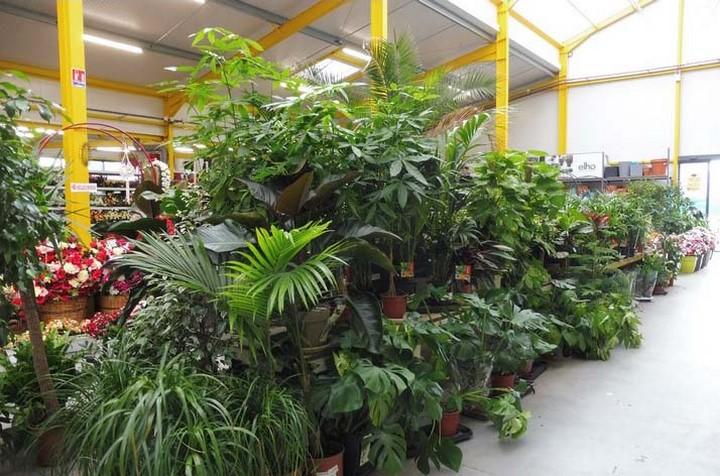 Espace Plantes Vertes d'intérieur