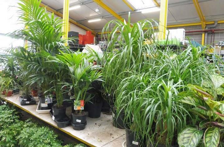 Espace Plantes Vertes intérieur