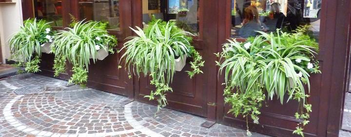Jardinières de plantes vertes