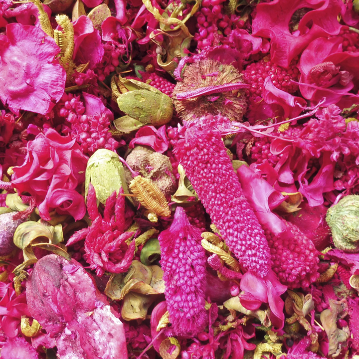 Pot pourri rose