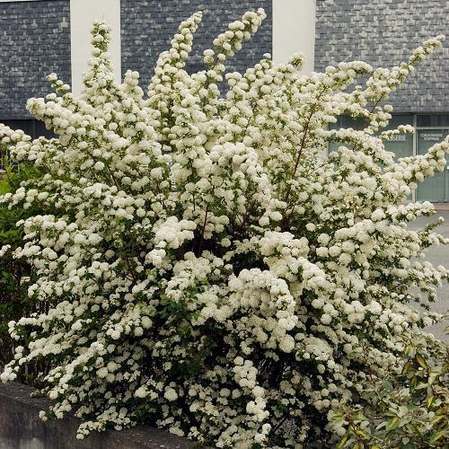 floraisons de printemps