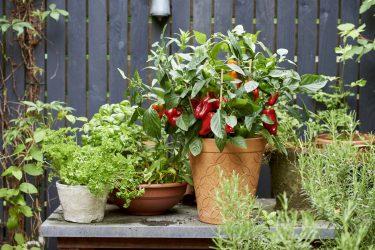 Plants Légumes Fruits Aromatiques