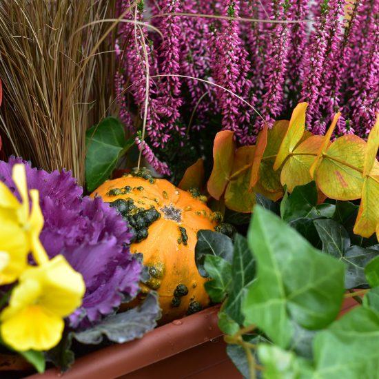 plantes d'automne