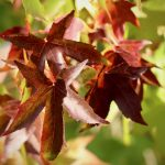 fall-leaves-4681235_1920