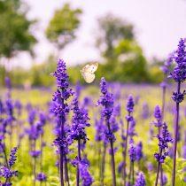 flower-1563088_1920