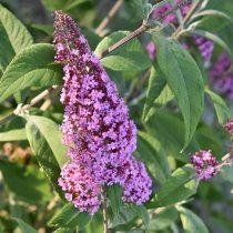 flower-4303150_1920 (1)