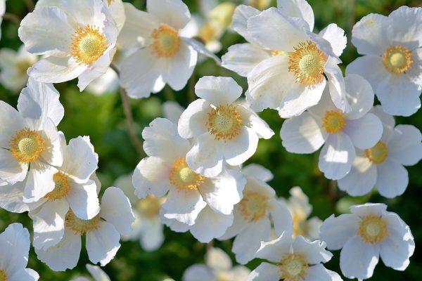 flowers-167895_1920