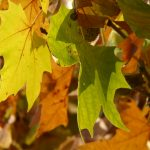 leaves-10706_1920