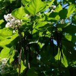 leaves-167826_1920