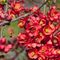 spring-4089302_1920